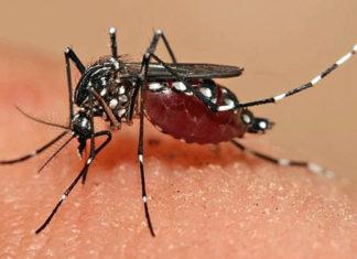 Defend Dengue