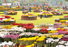 Chrysanthemum Flower Show