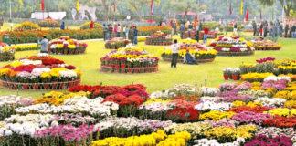 Chrysanthemum Flower Show
